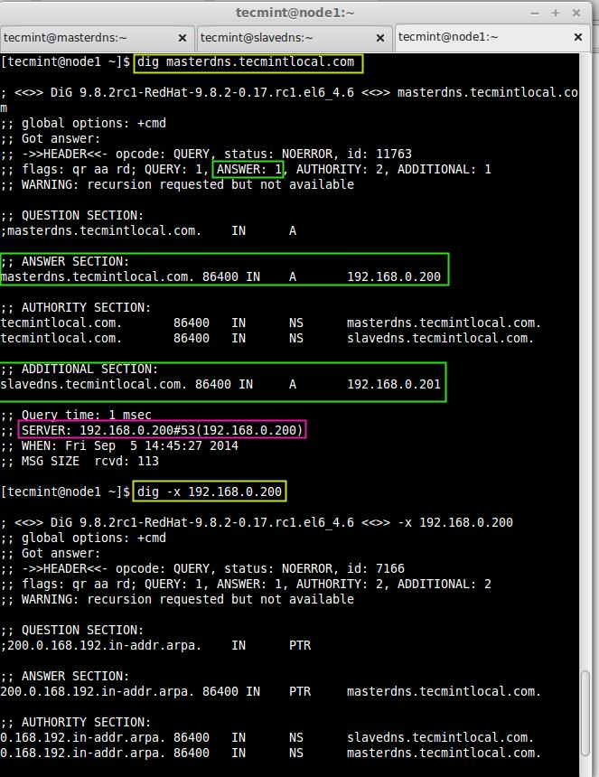 Check DNS Info