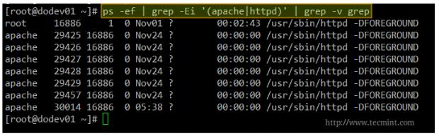 Check Apache Processes