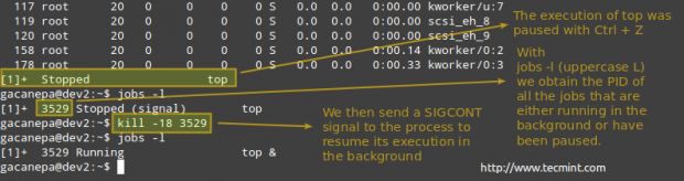 Terminate Process in Linux