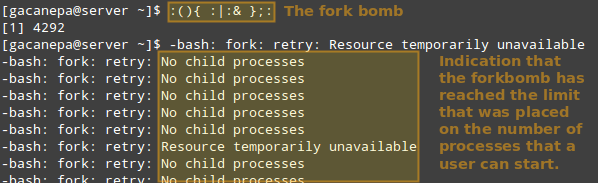 Run Shell Fork Bomb